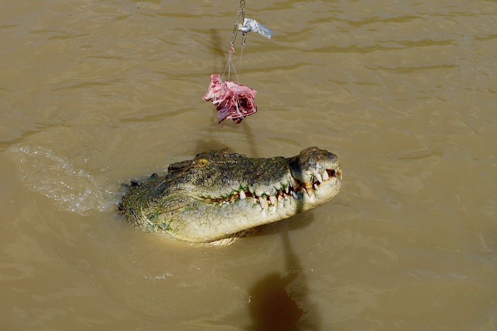 Jumping Crocodile Cruise: Krokodil Fütterung im Adelaide River - Northern Territory