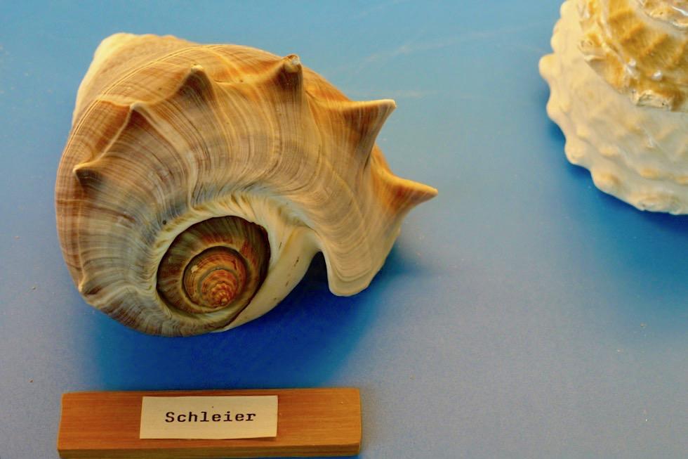 Kurioses Muschelmuseum in der Touristen-Information - Spiekeroog - Ostfriesische Inseln