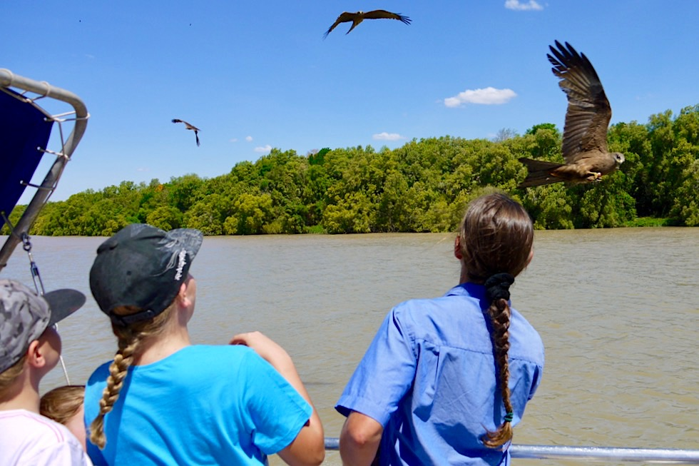 Spectacular Jumping Crocodile Cruise - Greifvögel Fütterung - Adelaide River - Northern Territory