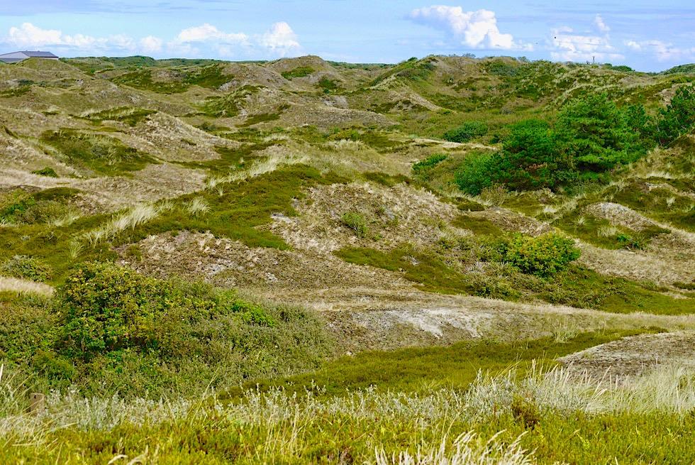 Spiekeroog - Grüne Insel mit grün bewachsenen Dünen - Ostfriesische Inseln