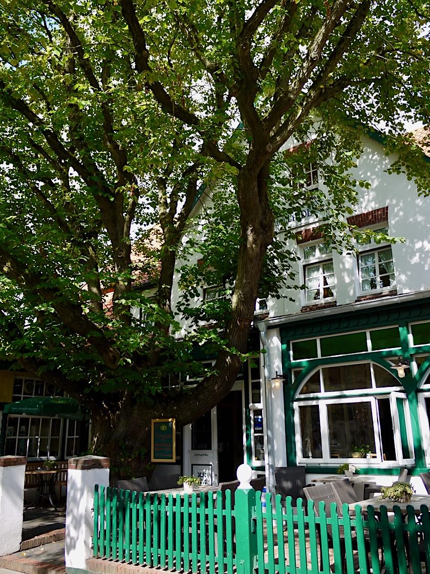 Spiekeroog - Knorrige Bäume & Schöne historische Gebäude - Ostfriesische Inseln