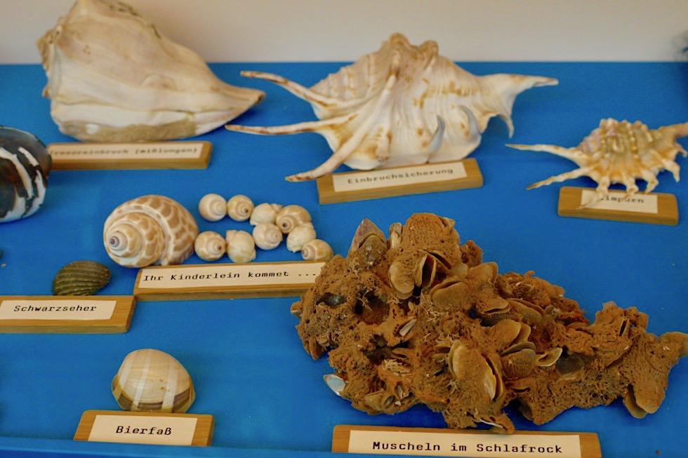 Spiekeroog - Kurioses Muschelmuseum: Muscheln mit lustigen Namen - Ostfriesische Inseln