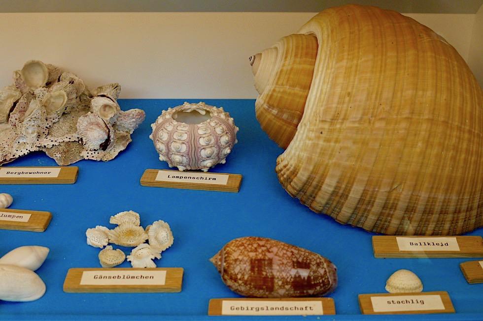 Spiekeroog - Kurioses Muschelmuseum: Muscheln mit lustigen Namen statt Latein - Ostfriesische Inseln