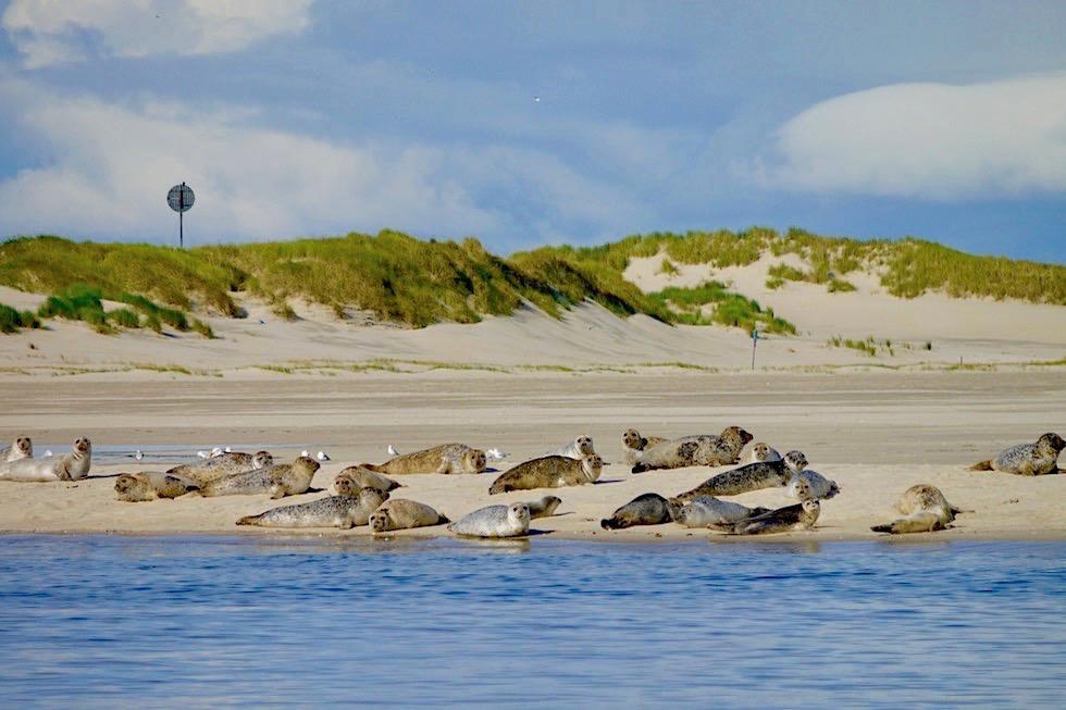 Spiekeroog - Seehundbänke an der Ostplate - Ostfriesische Inseln