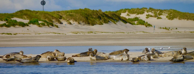 Spiekeroog – Seehunde, Grüne Ursprünglichkeit, Ruhe, Strand & Meer