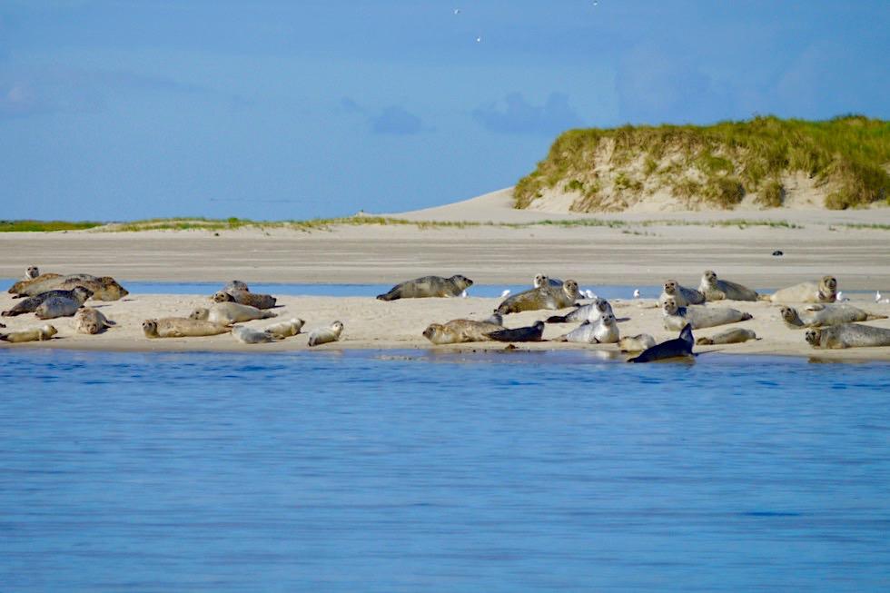 Spiekeroog - Seehunde im Osten der Insel - Ostfriesische Inseln