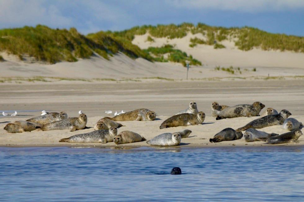 Spiekeroog - Strand, Dünen, Seehunde - Ostfriesische Inseln