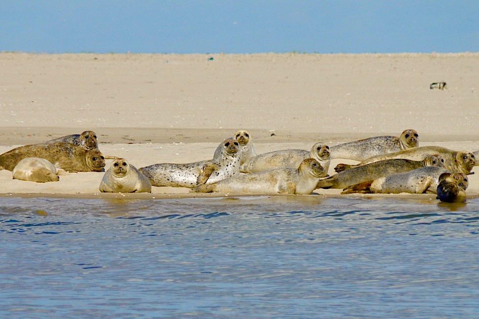 Spiekeroog - Wanderung zu den Seehundbänken im Osten - Ostfriesische Inseln