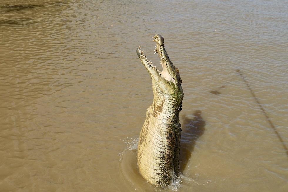 Springende Krokodile - Bootstouren auf dem Adelaide River - Northern Territory