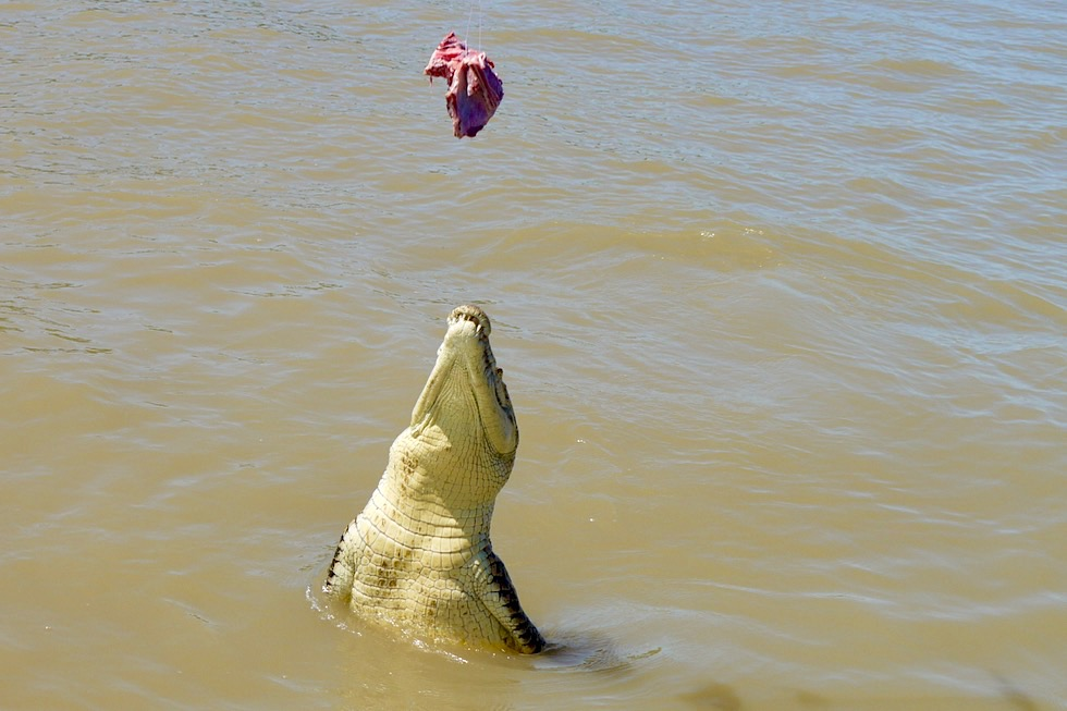 Jumping Crocodile Cruise: Springendes Krokodil - Adelaide River - Northern Territory