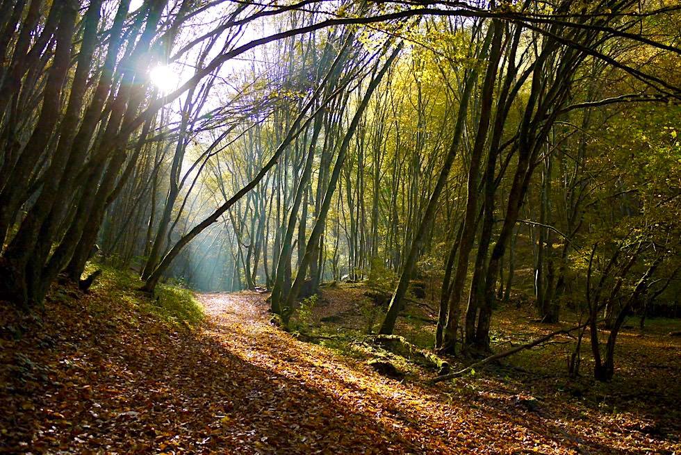 Traumschleife Ehrbachklamm - Sonnenstrahlen funkeln durch die Bäume & Wald - Hunsrück Wanderung - Rheinland-Pfalz