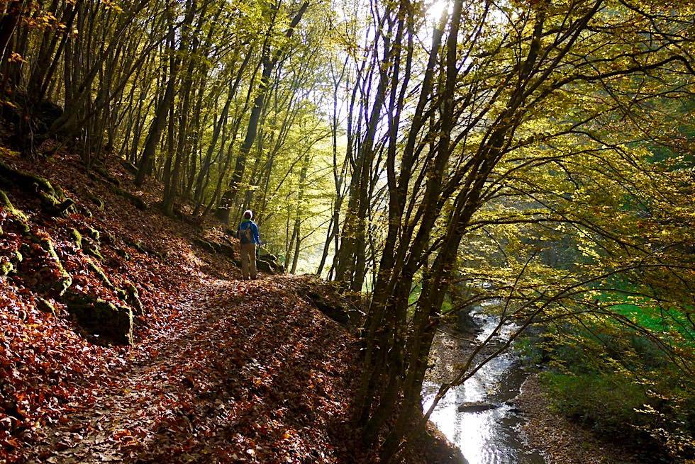 Traumschleife Ehrbachklamm - Waldweg entlang dem Ehrbach - Hunsrück Wanderung - Rheinland-Pfalz