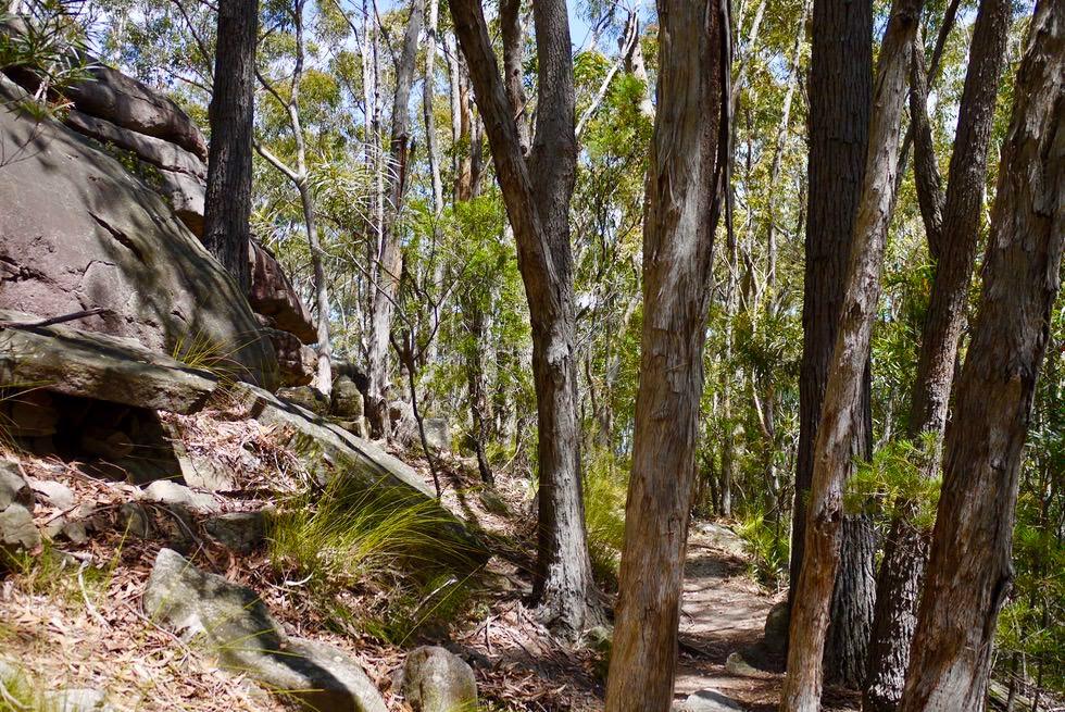 Pigeon House Mountain - Schöner Aufstieg entlang riesiger Felsbrocken - Morton National Park - New South Wales