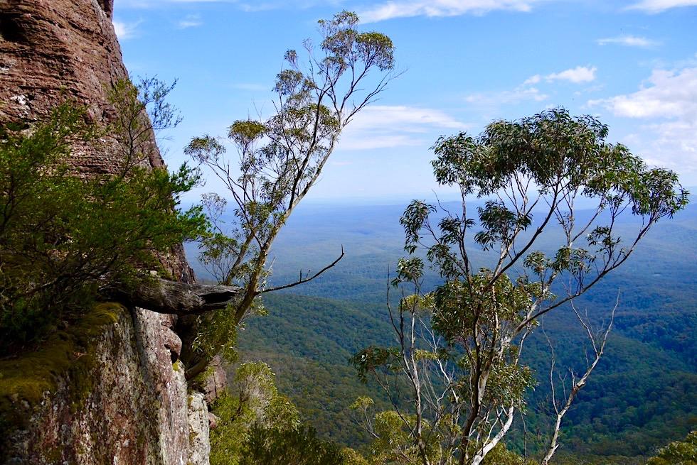 Pigeon House Mountain: eine der schönsten Kurzwanderungen in New South Wales - Ausblick von der Leiter - Morton National Park