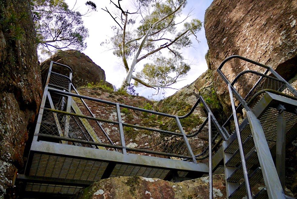 Didthul / Pigeon House Mountain - Spektakulär: Stahlleiter zum Gipfel - Morton National Park - New South Wales