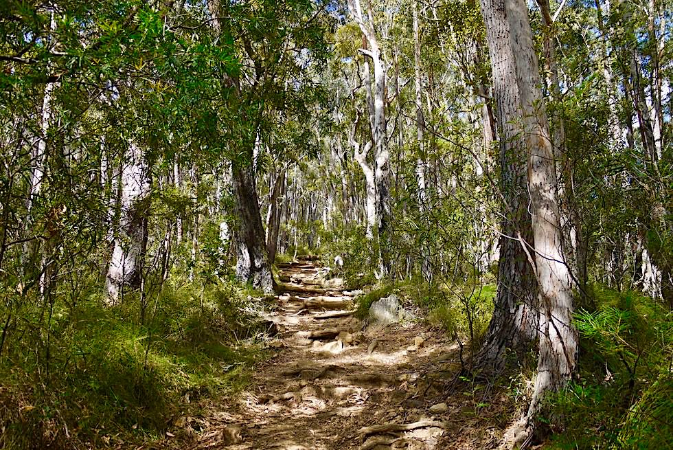 Pigeon House Mountain - Start der Wanderung - Morton National Park - New South Wales