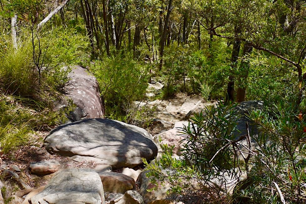 Didthul /Pigeon House Mountain Summit Walk - Schöner abwechslungsreicher Wanderpfad - New South Wales