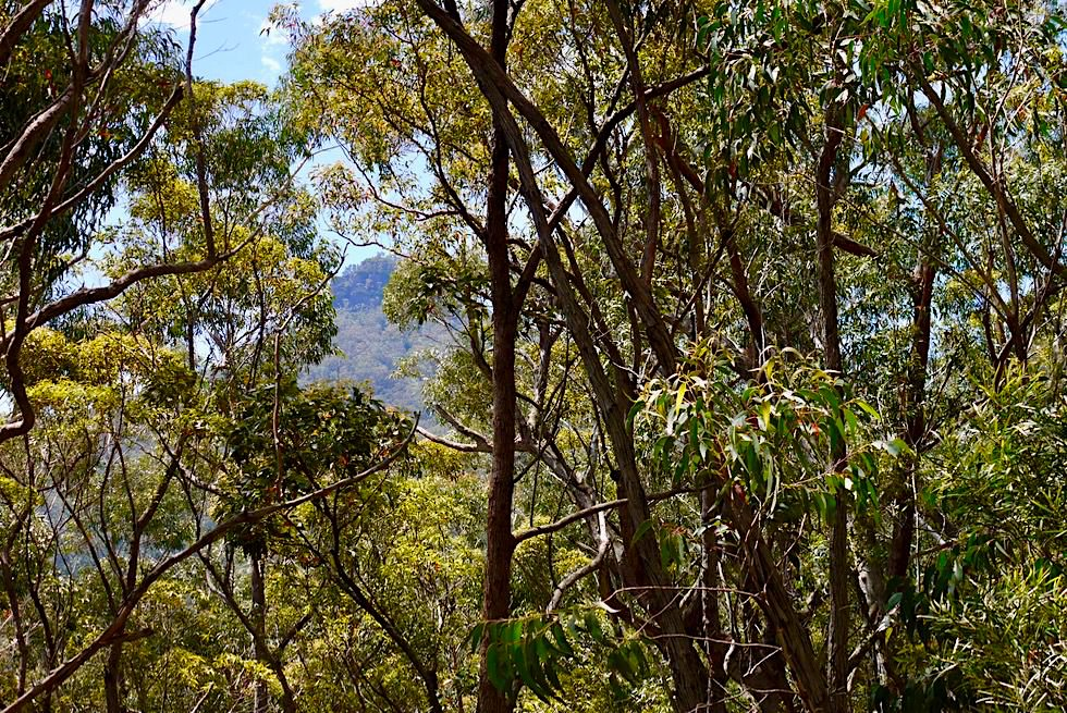 Pigeon House Mountain vom Wanderpfad gesehen - Morton National Park - New South Wales