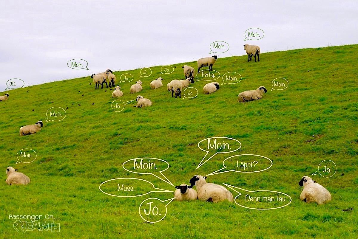 Gelauscht: Schafsgespräche beim Pilsumer Leuchtturm - Krummhörn - Ostfriesland