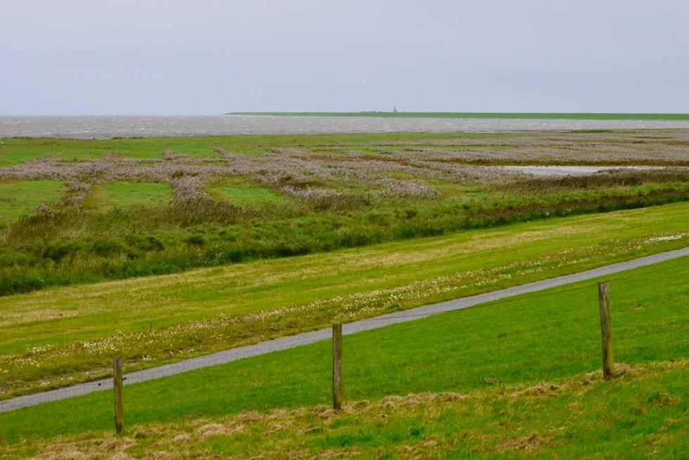 Salzwiesen beim Deich am Pilsumer Leuchtturm - Krummhörn - Ostfriesland