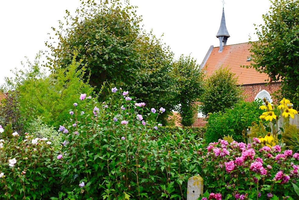 Uplewarder Kirche hinter einem Meer von Blumen - Krummhörn - Ostfriesland