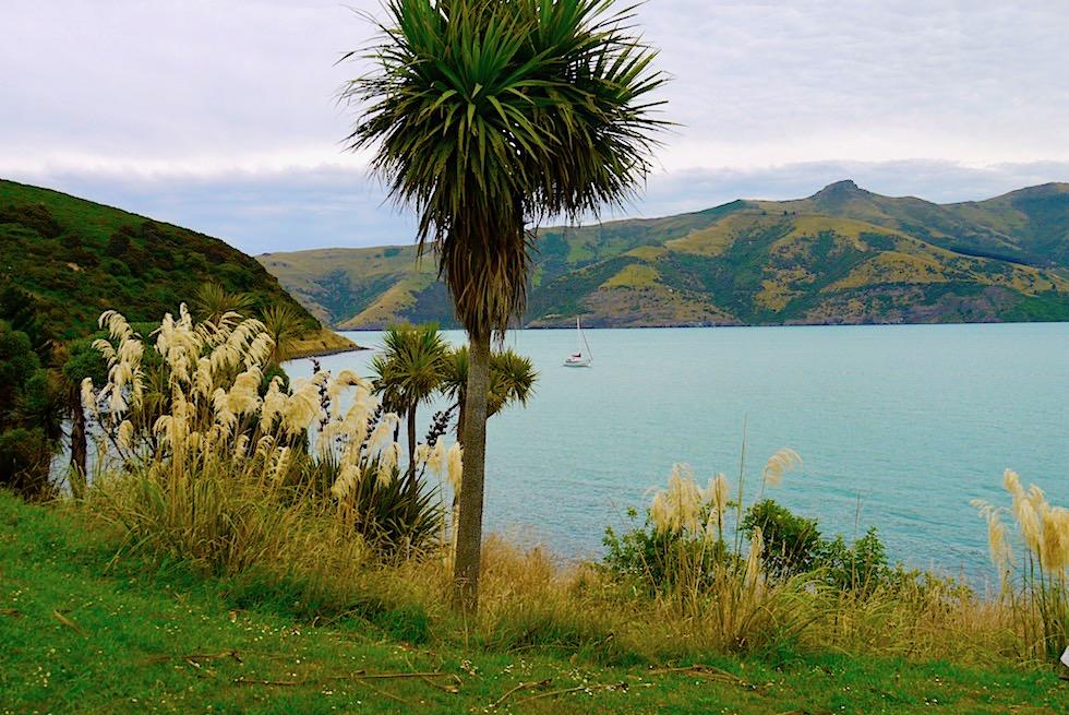 Banks Peninsula Roadtrip: eine für Neuseeland einzigartige Vulkanlandschaft - Chanterbury - Südinsel Neuseeland