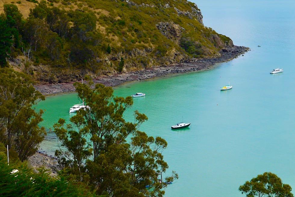 Wildschöne Banks Peninsula - Ausblick auf Robinson Bay von der Küstenstraße entlang Akaroa Harbour - Chanterbury -Südinsel Neuseeland