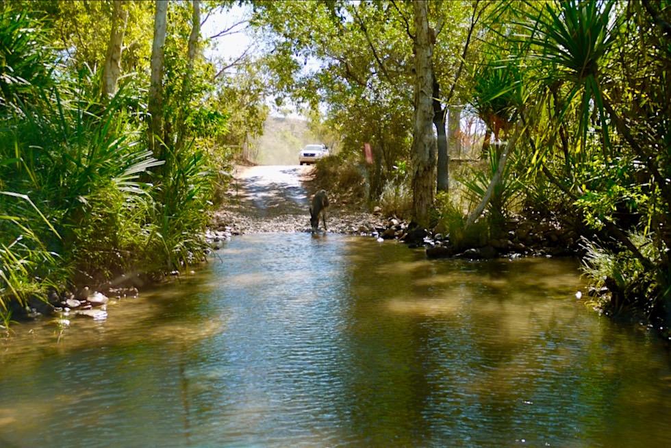 El Questro Wilderness Park - Wasserdurchfahrten erfordern Allrad-Fahrzeuge - Kimberley - Western Australia