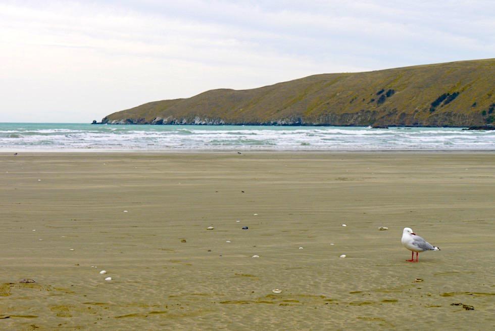 Okains Bay - Einsamer Sandstrand & geschützte Badebucht - Banks Peninsula - Südinsel Neuseeland