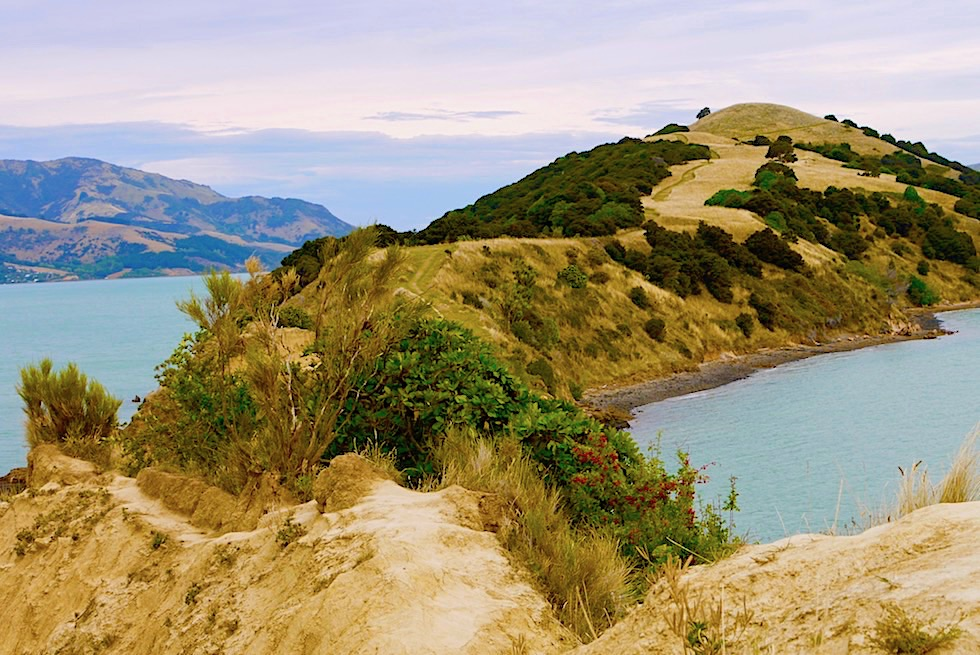 Onawe Peninsula in der Abendstimmung: ein Highlight & Geheimtipp auf der Banks Peninsula - Chanterbury - Südinsel Neuseeland