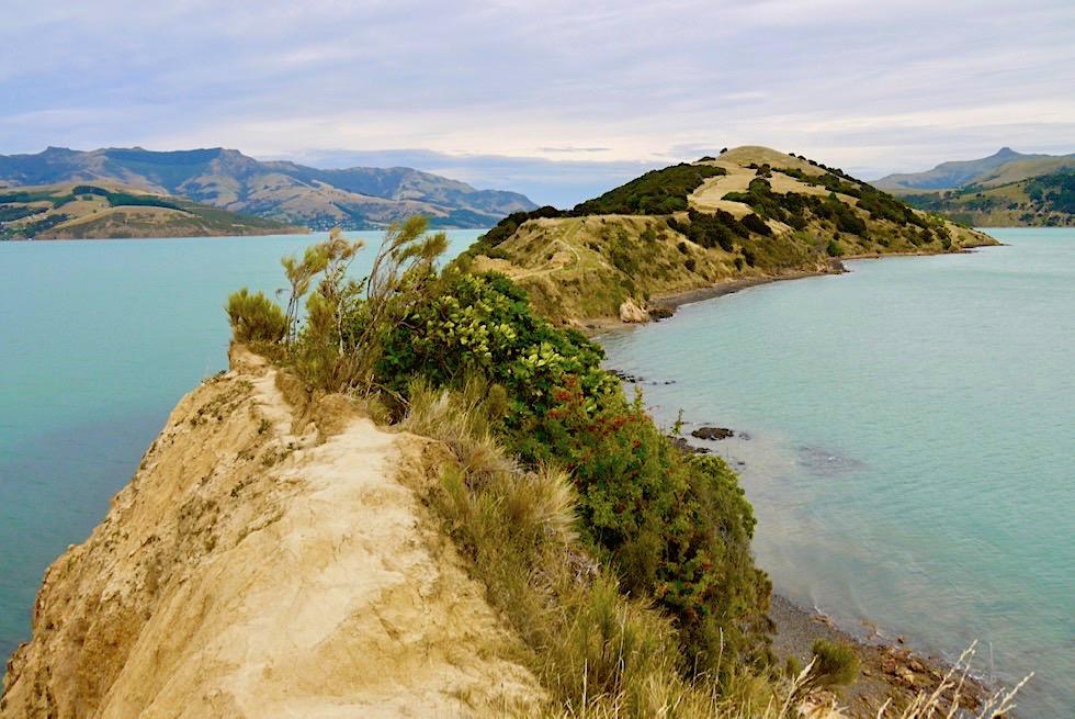 Wildschöne Onawe Peninsula: ein Geheimtipp auf der Banks Peninsula - Chanterbury - Südinsel Neuseeland