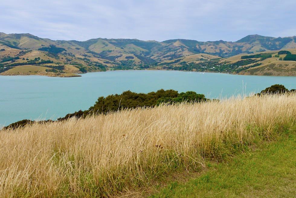 Geheimtipp Onawe Peninsula - Grandioser 360° Ausblicke über Akaroa & den großen natürlichen Hafen - Banks Peninsula - Südinsel Neuseeland