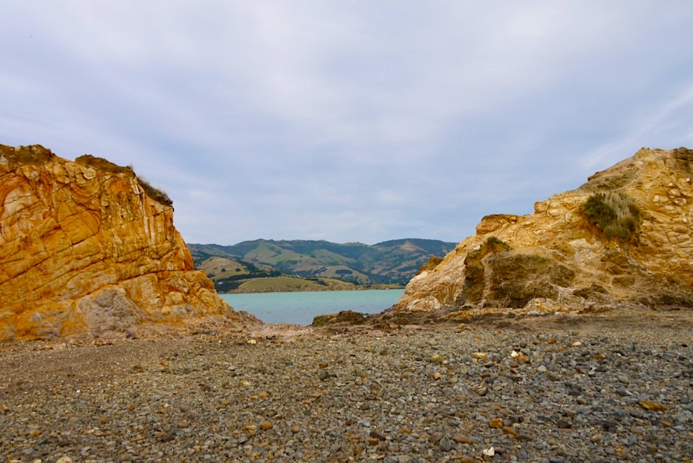 Onawe Peninsula Walk: über die Felszähne oder lieber dran vorbei? - Banks Peninsula - Chanterbury - Südinsel Neuseeland