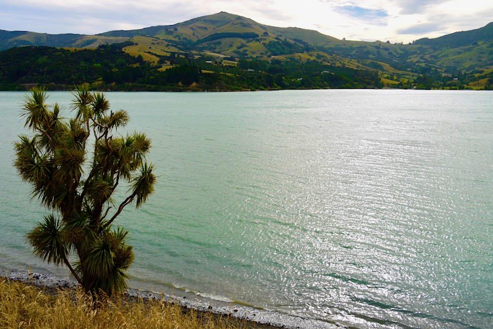 Onawe Peninsula Walk - grandiose Ausblicke auf den Hafen von Akaroa & die Flanken der wildschönen Banks Peninsula - Südinsel Neuseeland