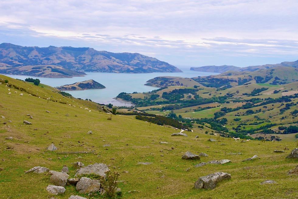 Faszinierende Ausblicke vom Scenic Drive einer Kammstraße auf der Banks Peninsula - Chanterbury - Südinsel Neuseeland