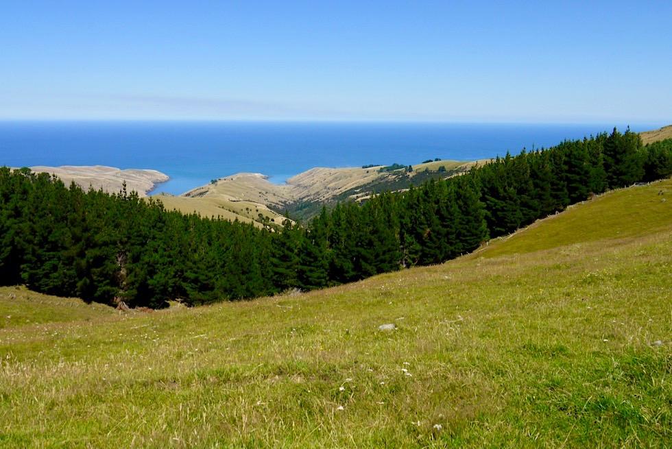 Faszinierender Ausblick vom Te Oka Bay Track in die Bucht und auf das Meer - Banks Peninsula - Canterbury - Südinsel, Neuseeland