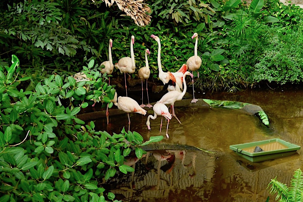 Tropical Islands - Echte Flamingos im Mangrovensumpf - Brandenburg
