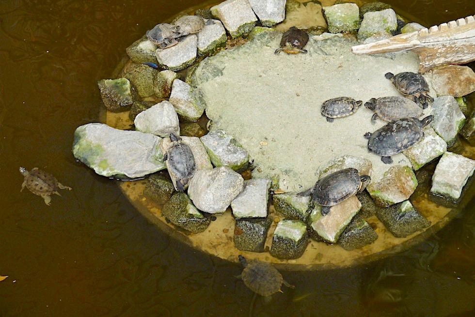 Tropical Islands - Wasserschildkröten im Mangrovensumpf - Brandenburg