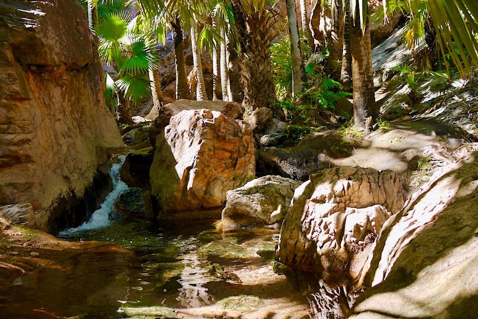 Zebedee Thermal Springs - Kaskaden von Badepools führen nach oben zur Quelle - Kimberley - Western Australia
