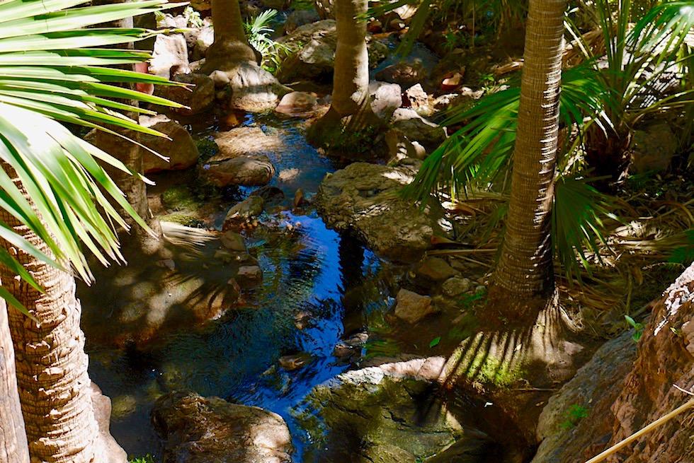 Zebedee Thermal Springs - kristallklares Wasser & Badepools - El Questro Wilderness Park - Kimberley - Western Australia