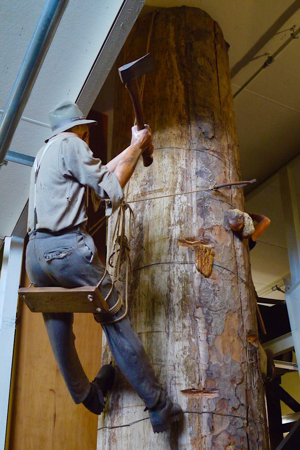 Kauri Museum - Holzverarbeitung zur Pionierzeit - Nordinsel Neuseeland