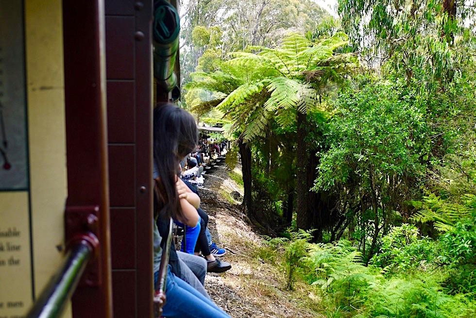 Puffing Billy Railway - Fahrt durch den südlichen Sherbrook Forest nahe Melbourne - Victoria