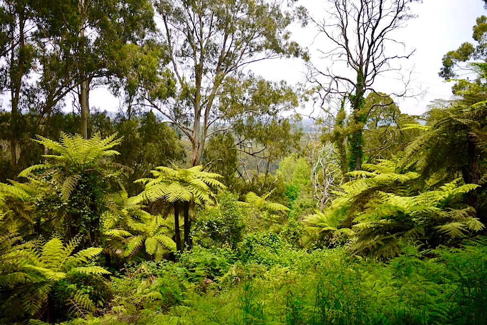 Sherbrook Forest mit Blick auf das Cardinia Reservoir nahe Melbourne - Victoria