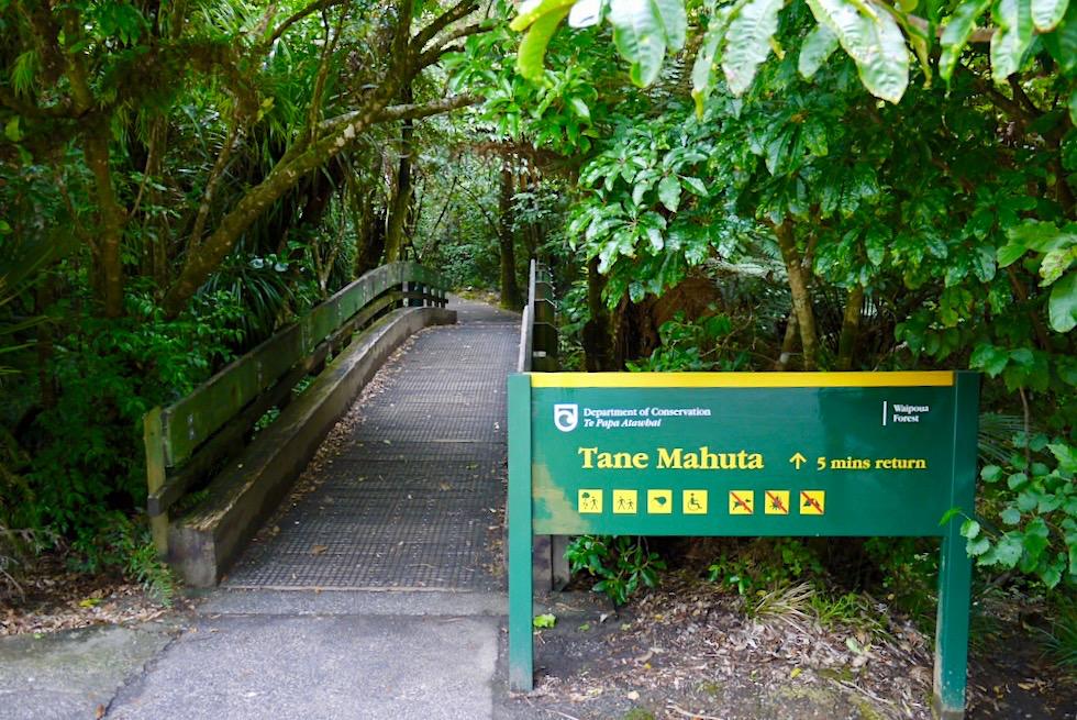 Tane Mahuta - Start Kauri Walk - Waipoua Forest - Nordinsel Neuseeland