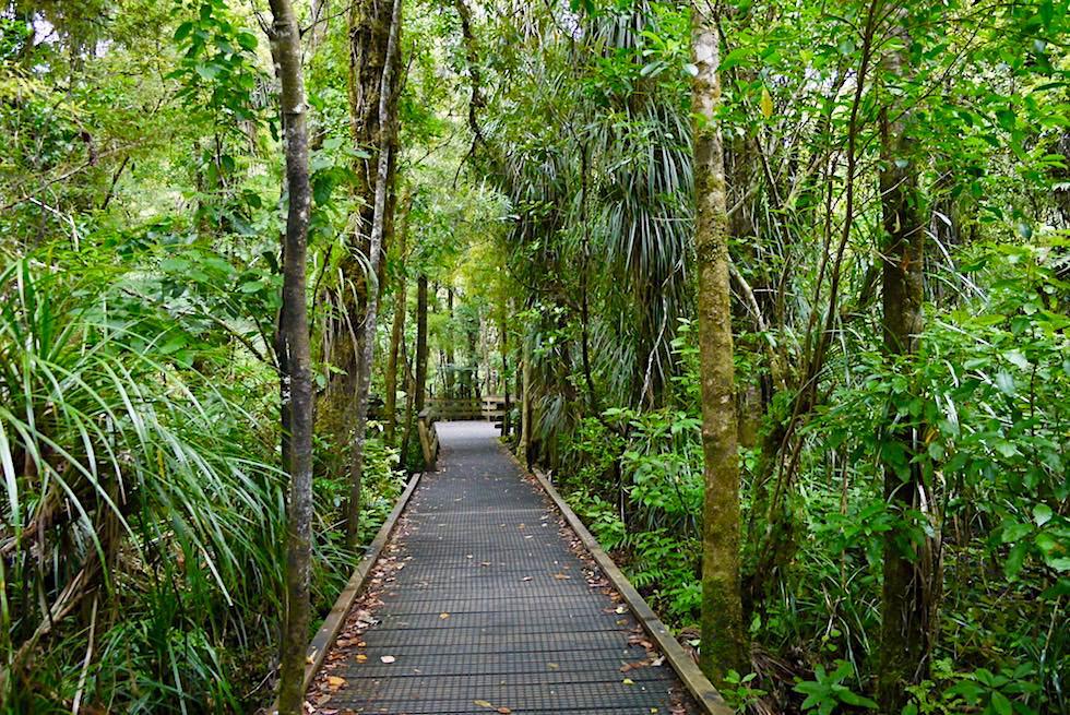 Waipoua Forest - Boadwalk zur Tane Mahuta - Nordinsel Neuseeland
