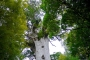 Waipoua Forest, Tane Mahuta & Kauri Museum – Kauri Highlight der Nordinsel