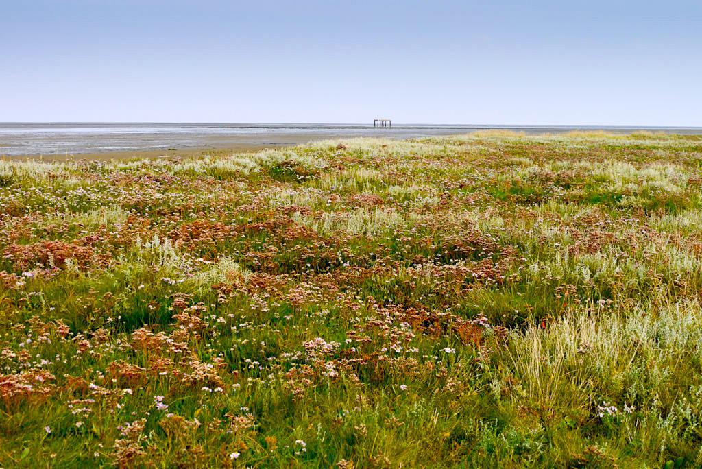 Borkum - Die großen Salzwiesen befinden sich im Südosten der Insel - Ostfriesische Inseln