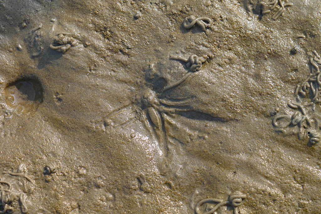 Borkum Watt: Unterschied zwischen Wurm- und Muschelspur im Watt - Ostfriesische Inseln