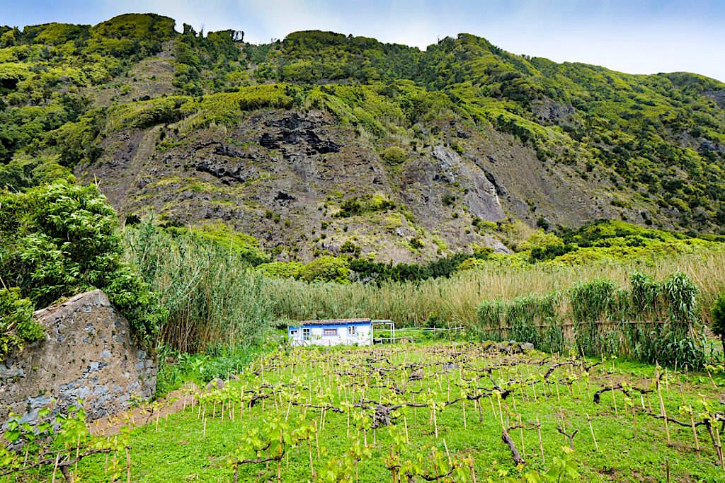 Faja do Calhau - Wenige Häuser, Steilwände, Weinreben & Steinstrand: ein Geheimtrip auf Sao Miguel - Azoren
