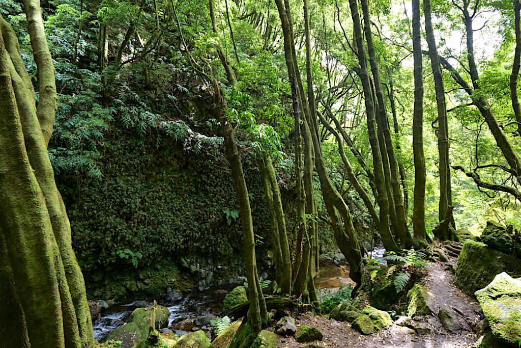 Salto do Prego Wanderung - Flussverlauf beim Wasserfall - Sao Miguel - Azoren